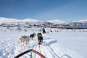Alaskan Huskies dog-sledding at Villmarkssenter wilderness centre on Kvaloya Island, Tromso in Arctic Circle, Northern Norway