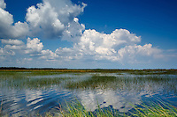 A beautiful blue sky over Florida's St. Marks National Wildlife Refuge where the salt marshes and freshwater marshes meet.