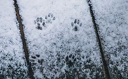 THEMENBILD - Katzenspuren im Schnee auf einem Holzbrett, aufgenommen am 29. Jänner 2020 in Kaprun, Oesterreich // Cat tracks in the snow on a wooden base, in Kaprun, Austria on 2020/01/29. EXPA Pictures © 2020, PhotoCredit: EXPA/Stefanie Oberhauser