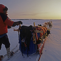 INTERNATIONAL ARCTIC PROJECT DOGSLED EXPEDITION. Will Steger mushes his dogs on frozen Arctic Ocean nearTuktoyaktuk, Northwest Territories, Canada.