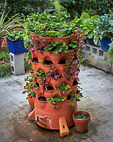 Strawberry Plants and Berries in a Grow Tower. Urban garden & farm in St. Petersburg Florida. Image taken with a Leica TL-2 camera and 35 mm f/2.2 lens (ISO 100, 35 mm, f/2.8, 1/250 sec).