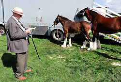 © Licensed to London News Pictures.26/08/15<br /> Egton, UK. <br /> <br /> A visitor checks his programme as he stands next to a shire horse and her fowl at the 126th Egton Show in North Yorkshire. <br /> <br /> Egton is one of the largest village shows in the country and is run by a band of voluntary helpers. <br /> <br /> This year the event featured wrought iron and farrier displays, a farmers market, plus horse, cattle, sheep, goat, ferret, fur and feather classes. There was also bee keeping, produce and handicrafts on display.<br /> <br /> Photo credit : Ian Forsyth/LNP