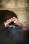 Detail of horse being groomed, Estancia Huechahue, Patagonia, Argentina, South America