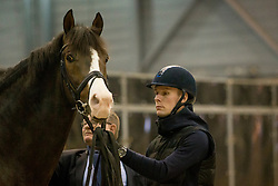 Bachmann Andersen Daniel, DEN, Blue Hors Don Olymbrio<br /> Horse Inspection - The Dutch Masters<br /> © Hippo Foto - Sharon Vandeput<br /> 14/03/19