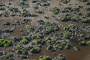 Coastal Wetland<br /> Mahaica Miconi Abari<br /> GUYANA<br /> South America