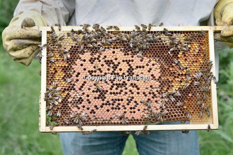 Nederland, Nijmegen, 25-8-2018In een oude boomgaard in Lent, de Waalsprong Nijmegen Noord, staan bijenkasten vanwaar bijen de bloesem bestuiven en honing produceren .Foto: Flip Franssen