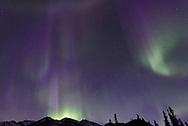 The aurora borealis (northern lights) as seen from inside Denali National Park, Alaska.