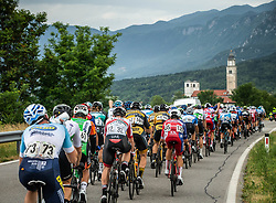 Peloton near Ajdovscina during 4th Stage of 26th Tour of Slovenia 2019 cycling race between Nova Gorica and Ajdovscina (153,9 km), on June 22, 2019 in Slovenia. Photo by Vid Ponikvar / Sportida
