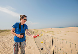 Project Officer Emma Witcutt checking an electric fence, Little tern Sternula albifrons monitoring site, part of an EU Life Project to protect this species, Winterton-on-Sea, Norfolk, July