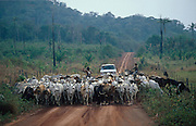 South America, Brazil, Amazon. Deforestation of primary rainforest by campesinos, this land has been sold sold for cattle ranching.  Then will become arid desert. 2001..'MEAT' across the World..foto © Nigel Dickinson