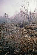 Morning Dew & Web - Smoky Mountains N.P.