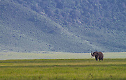 Lone bull elephant, Ngorongoro Crater, Tanzania