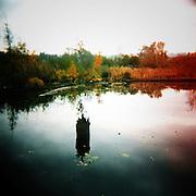 The Lake Washington Arboretum Waterfront Trail