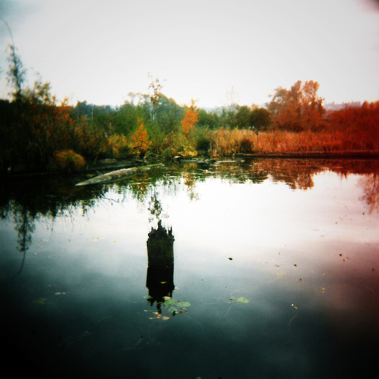 Lake Washington Arboretum Waterfront Trail No.4