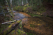 Recently used spawning site of Sea trout in small river Strīķupe | Vidzeme, Latvia