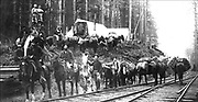 Northern Pacific railroad crew and camp photo was taken around 1890.  Note the lumber on the left and the substantial packs on the mules as they appear to be heading out to a long day's work.