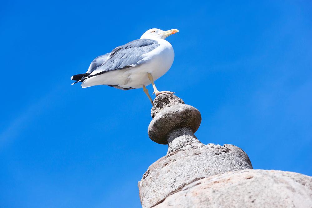 Seagull against clear blue sky.