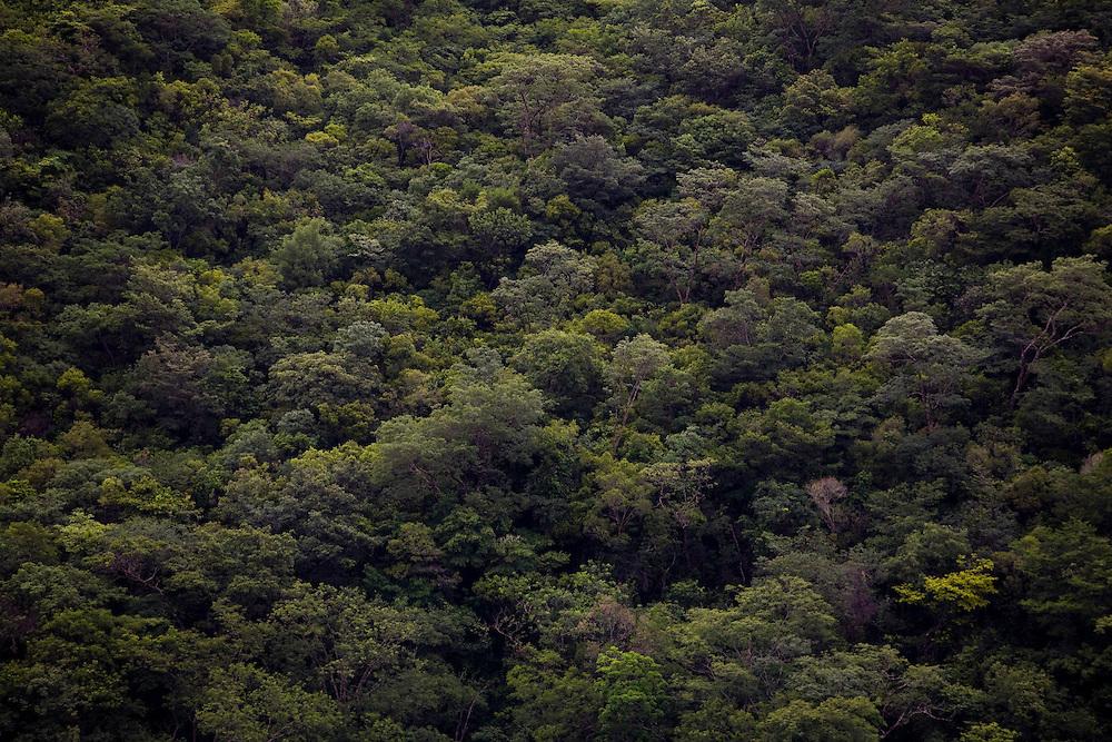 Santana do Riacho_MG, Brasil...Arvores de uma floresta...Trees in a forest...Foto: LEO DRUMOND / NITRO