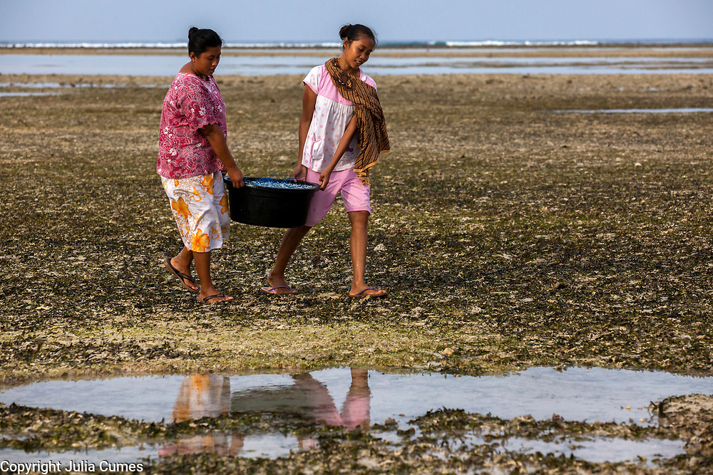 """Women carry a bucket of """"finger fish"""" on Gili Air, Indonesia. The fish is shared amongst families and often sold in small amounts as a protein substitute for those who can't afford more expensive fish or chicken."""