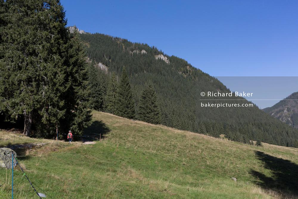 A lady walker makes her way along the top of Polana Chocholowska a hiking route on Dolina Chocholowska in the Tatra National Park, on 17th September 2019, near Zakopane, Malopolska, Poland.
