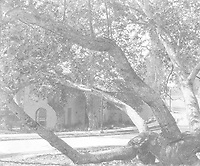 Circa 1928 Looking at 7040 Hillside Ave. thru an old Sycamore tree, across the street