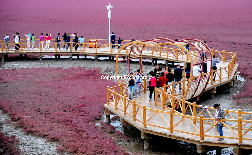 SHENYANG, CHINA - SEPTEMBER 14: (CHINA OUT) <br /> <br /> The general view of large bodies of Red  Crabapple on September 14, 2014 in Shenyang Panjin, Liaojing province of China. Red Seabeach locates in the northwest of Bohai Sea Gulf with over 200,000 square meters. The Red Crabapple blooms annually after autumn and looks like sunglow<br /> ©Exclusivepix