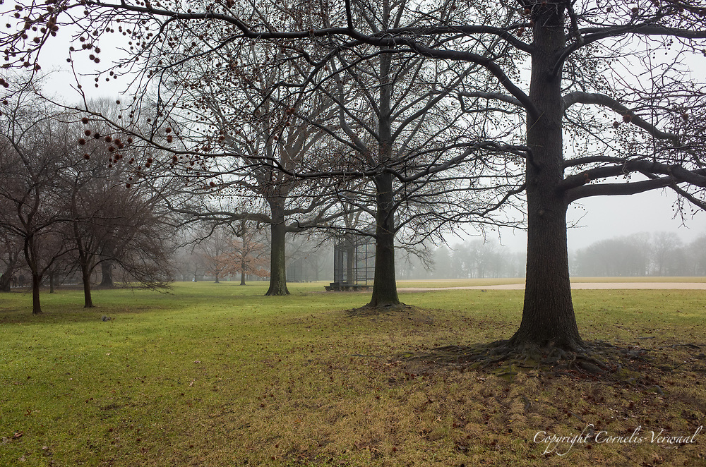 A misty scene at The Great Lawn in Central Park, awaiting a new season of play and games. In the foreground os a Sweet Gum tree filled with seed balls.