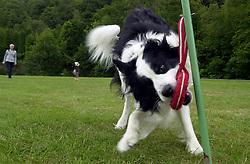 Eddie Sander with his Dogs Jackson and Inka<br /> <br /> 18 June 2004<br /> <br /> Copyright Paul David Drabble<br /> <br /> [#Beginning of Shooting Data Section]<br /> Nikon D1 <br /> <br /> Focal Length: 26mm<br /> <br /> Optimize Image: <br /> <br /> Color Mode: <br /> <br /> Noise Reduction: <br /> <br /> 2004/06/18 09:24:48.4<br /> <br /> Exposure Mode: Manual<br /> <br /> White Balance: Auto<br /> <br /> Tone Comp: Normal<br /> <br /> JPEG (8-bit) Fine<br /> <br /> Metering Mode: Center-Weighted<br /> <br /> AF Mode: AF-S<br /> <br /> Hue Adjustment: <br /> <br /> Image Size:  2000 x 1312<br /> <br /> 1/200 sec - F/8<br /> <br /> Flash Sync Mode: Not Attached<br /> <br /> Saturation: <br /> <br /> Color<br /> <br /> Exposure Comp.: 0 EV<br /> <br /> Sharpening: Normal<br /> <br /> Lens: 17-35mm F/2.8-4<br /> <br /> Sensitivity: ISO 200<br /> <br /> Image Comment: <br /> <br /> [#End of Shooting Data Section]