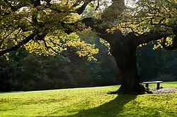 """""""A quiet Spot"""" Autumn Trees Endcliffe Park Sheffield<br /> 21 October 2012<br /> Image © Paul David Drabble"""