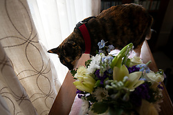 Zelda the cat sniffs a bouquet of flowers that arrived in memory of her companion Lewis, Thursday, Dec. 24, 2020, in Oakland, Calif. Lewis was euthanized the previous day at the age of 16. (Photo by D. Ross Cameron)