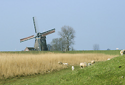 Katwoude, Waterland, Noord Holland, Netherlands