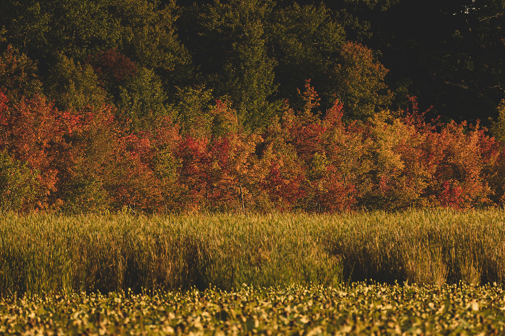 The shifting fall colors within Great Meadows on an early autumn afternoon.