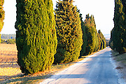 Avenue allee with cypress trees to Chateau des Fines Roches, Chateauneuf-du-Pape, Vaucluse, Rhone, Provence, France