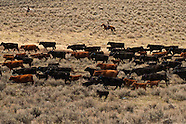 Cattle-with people
