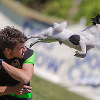 Enrico Collini from Italy competes with his dog Jack during the Flydogs Extreme Distance Frisbee European Championships in Budapest, Hungary. 15. June 2012. Xinhua Interanational News Agency/Attila Volgyi