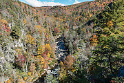 From Chimney View Overlook in Linville Gorge Wilderness Area, see vivid fall foliage colors in mid October. Walk to see impressive Linville Falls in Burke County, Pisgah National Forest, North Carolina, USA. Linville Falls drop 90 feet in a multi-level cascade, viewable from several overlooks along two trails starting from Linville Falls Visitors Center, run by the National Park Service. Directions: Turn eastwards at Mile Post 316.3 of the Blue Ridge Parkway (north of where US 221 crosses the Parkway and south of where NC 181 crosses). Linville River begins at Grandfather Mountain and enters the 12-mile Linville Gorge at Linville Falls. Linville Gorge, near the town of Linville Falls (66 miles north of Asheville), is the deepest and one of the most rugged and scenic gorges in the Eastern USA (qualifying for the nickname Grand Canyon of the East, along with more than a dozen chasms likewise tagged in other Eastern states). It is protected by Linville Gorge Wilderness Area, within Pisgah National Forest. Spared by its rugged terrain from clear-cutting in the early 1900s, Linville Gorge has some of the best remnant stands of uncut, old-growth forest in the southern Appalachians. This is one of the few places where the Rosebay, Catawba, and Carolina rhododendron grow side by side.
