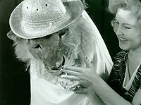 1936 A lion celebates his 3rd birthday at The Brown Derby on Vine St.