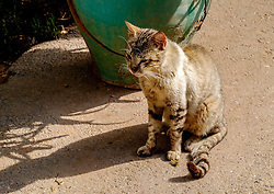 A cat sitting in the gardens of the Bahia Palace in Marrakech, Morocco, North Africa<br /> <br /> <br /> (c) Andrew Wilson | Edinburgh Elite media