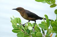 Unknown Bird along Black Point Wildlife Drive in Merritt Island Wildlife Refuge. Image taken with a Nikon D3 and 70-200 mm VRII + TC-EIII 20 teleconverter  (ISO 1400, 400 mm, f/5.6, 1/200 sec)