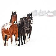 20110113Winter on the Farm