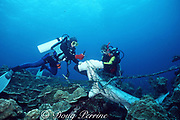 divers cut free carcasses of scalloped hammerhead sharks, Sphyrna lewini, killed by shark net illegally set in Galapagos Marine Reserve, Wolf ( Wenman ) Island, Galapagos, Ecuador ( Eastern Pacific Ocean )