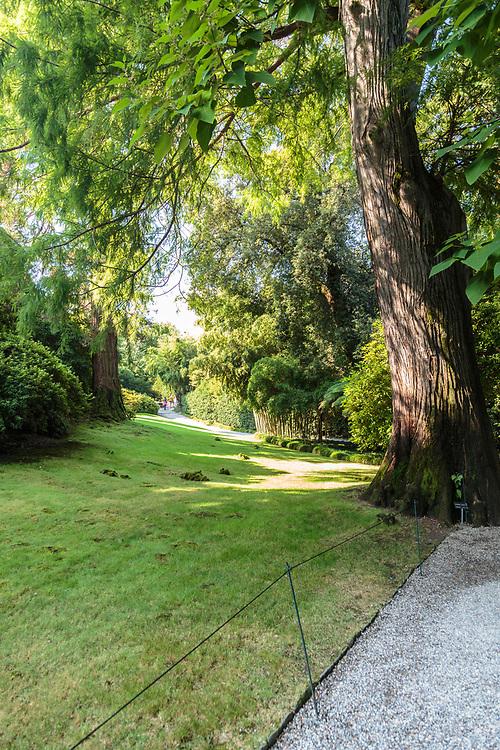 The impressive bald cypress in Isola Madre garden at Lago Di Maggiore, Italy.