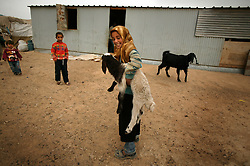 Family members of a newborn Bedouin baby, play with sheep and goats outside their home, Bethlehem, Palestinian Territories, Nov. 16, 2004. For each male that is born, the family will slaughter two sheep. For each female, one will be slaughtered. The family's eighth child was born in a small Bedouin village outside of Bethlehem, on the day of Yasser Arafat's death.