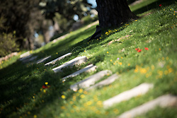 28 February 2020, Jerusalem: A small garden path runs torwards what used to be an old water reservoir. The Lutheran World Federation campus, including the Augusta Victoria Hospital campus, is one of few green areas still remaining in East Jerusalem.