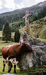 THEMENBILD - ein Pinzgauer Rind steht neben einem Felsen auf dem ein Kruzifix steht, aufgenommen am 09. September 2018, Rauris, Österreich // a Pinzgau cattle stands next to a rock on which a crucifix stands on 2018/09/09, Rauris, Austria. EXPA Pictures © 2018, PhotoCredit: EXPA/ Stefanie Oberhauser