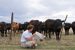 Man reading his newspaper to a herd of cattle