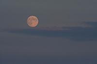 A beautiful Blue Moon rises over Lake Winnipesaukee Thursday evening.  (Karen Bobotas/for the Laconia Daily Sun)