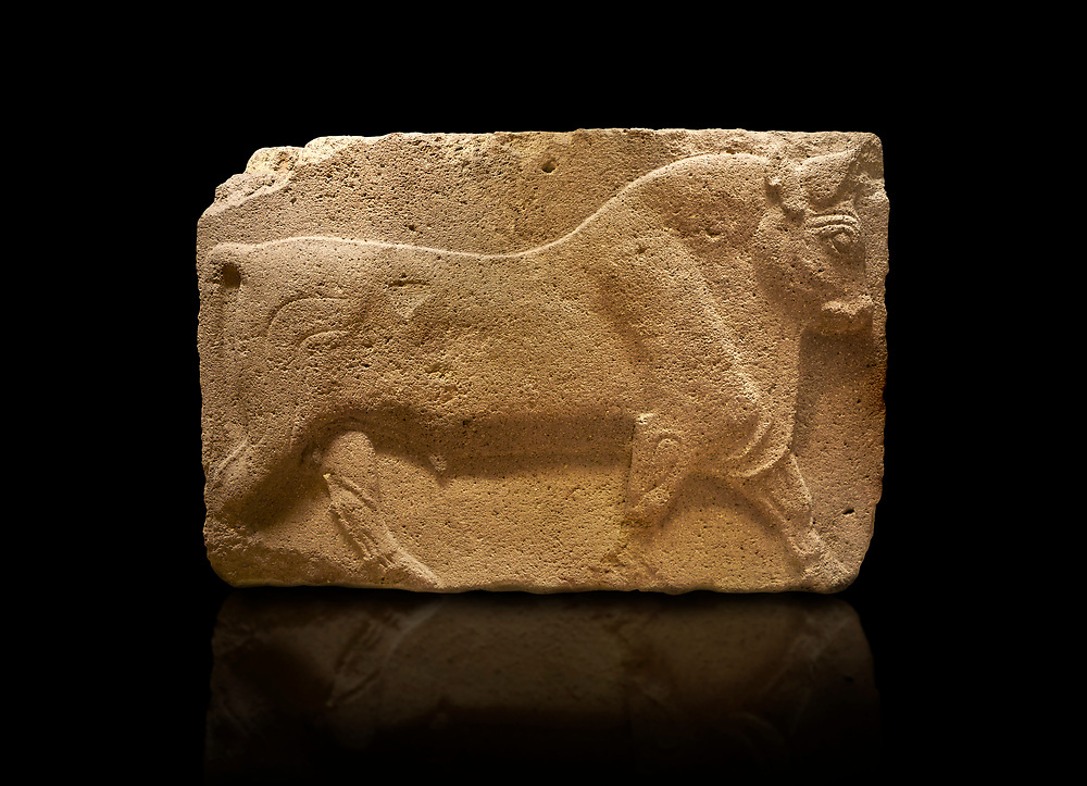 Phrygian relief sculpted orthostat stone panel, 1200-700 B.C. Anatolian Civilisations Museum, Ankara, Turkey. Figure of a walking bull.<br /> <br /> Against a black background. .<br /> <br /> If you prefer you can also buy from our ALAMY PHOTO LIBRARY  Collection visit : https://www.alamy.com/portfolio/paul-williams-funkystock/phrygian-antiquities.html  - Type into the LOWER SEARCH WITHIN GALLERY box to refine search by adding background colour, place, museum etc<br /> <br /> Visit our CLASSICAL WORLD PHOTO COLLECTIONS for more photos to download or buy as wall art prints https://funkystock.photoshelter.com/gallery-collection/Classical-Era-Historic-Sites-Archaeological-Sites-Pictures-Images/C0000g4bSGiDL9rw