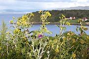 The yellow flowers are Silphium perfoliatum, cup plant. Norwegian: skålplante.