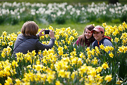 © Licensed to London News Pictures. 03/04/2016. London, UK. A family enjoying sunshine and warm weather in Green Park, London on Sunday, 3 April 2016. Photo credit: Tolga Akmen/LNP